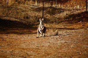Szállás Tamworth, Ausztrália