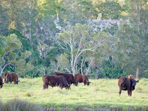 Szállás Taree, Ausztrália