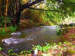 Szállás Guapiles, Costa Rica