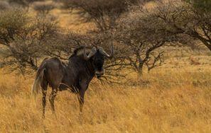 Szállás Mafikeng, Dél-Afrika