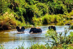 Szállás Phalaborwa, Dél-Afrika