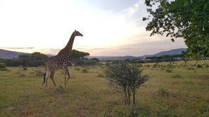 Szállás Rustenburg, Dél-Afrika