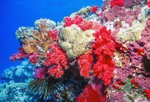 Szállás Coral Coast, Fidzsi